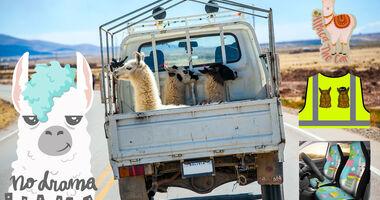 Alpaca-Zubehör fürs Auto