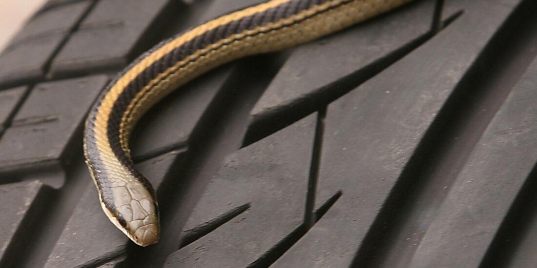 Geländewagen, Reifentest, Profil, Schlange