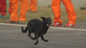 Hund - GP Indien - Training - 28.10.2011