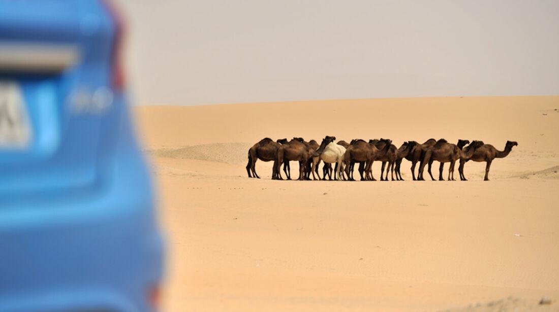 Kamelherde in Wüste