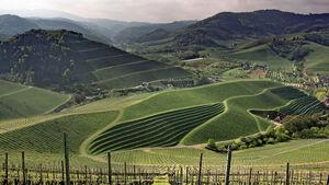 Landschaft, Schau ins Land, Weinberge