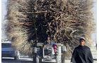 MKL Bild des Tages Dezember 2009