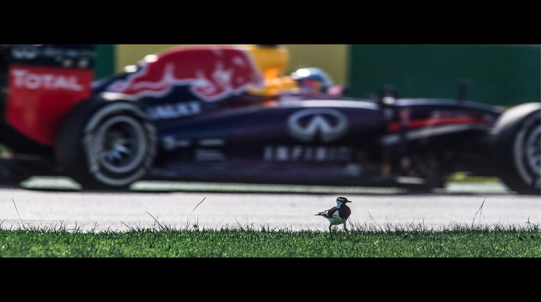 Sebastian Vettel - Formel 1 - GP Australien 2014 - Danis Bilderkiste
