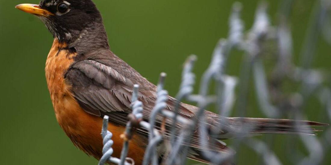 Vogel beim GP Kanada